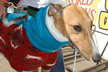 image greyhounds6-jpg