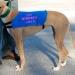 image greyhounds2-jpg