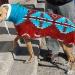 image greyhounds7-jpg